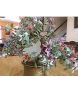 JADE MONEY TREE brings good luck and never needs watering! - $181.98