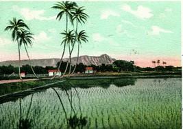 Vtg Postale 1906 Pmc Rice Field Near Honolulu Hawaii - Île Curio Magasin... - $29.93