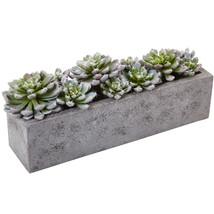 Succulent Garden w/Textured Concrete Planter - $77.24 CAD