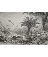 HUNTING Peacocks Birds in Jungle - 1878 Fine Quality Print - $35.96