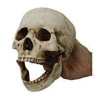 Homo Sapiens Skull with Movable Jaw Collectible Desktop Figurine Gift 6 ... - £18.98 GBP
