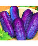 """ 100 PCS SEEDS Purple Cucumber Seeds Garden Farm Vegetable Plants Seeds... - $12.38"