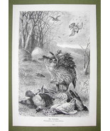 BIRDS Hunting Shooting from Camouflaged Shed - VICTORIAN Era Print - $12.14