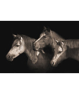 Three Ponies by Robert Dawson Canvas Giclee Portrait of 3 Horses Open Ed... - $246.51
