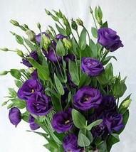 100pcs Lisianthus Bonsai plant Lisianthus Flower (19), HZ Beautiful Flow... - $8.89