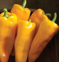 SHIP From US, 25 Seeds Escamillo Hybrid Sweet Pepper, DIY Healthy Vegeta... - $30.99