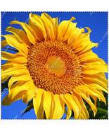 50pcs/bag Giant Sunflower Seeds potted or yard flower plants seeds - $2.99
