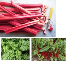 Combo RHUBARB Victoria, SWISS CHARD Ruby Red, SPINACH Bloomsdale 25-30 s... - $4.39