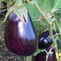 Black Beauty - eggplant - $4.99