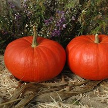 12 Seeds of Rouge Vif D'Etampes Pumpkin / Cucurbita pepo - $13.85