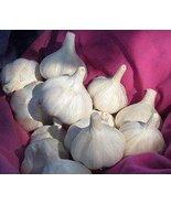Romanian Red Garlic Bulbs Organically Grown (1/2 Lb) - $16.78