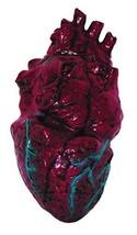 Simulated Body Parts ~ Heart 1/Pkg, Pkg/1 - $21.04