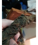 MANDRAKE ROOT (Mandragora officinarum) EUROPEAN ORGANIC una pieza entera seca - $594.00