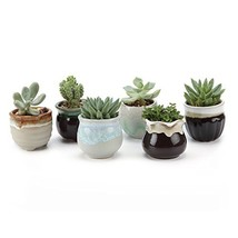 T4U 2.5 Inch Ceramic Succulent Pot, Cactus Planter Pot Plant Container F... - $17.06