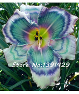 New!!! 50 Pcs Holland Rainbow Daylily Seeds Rare Day Lily Flower Plant G... - ₹283.75 INR