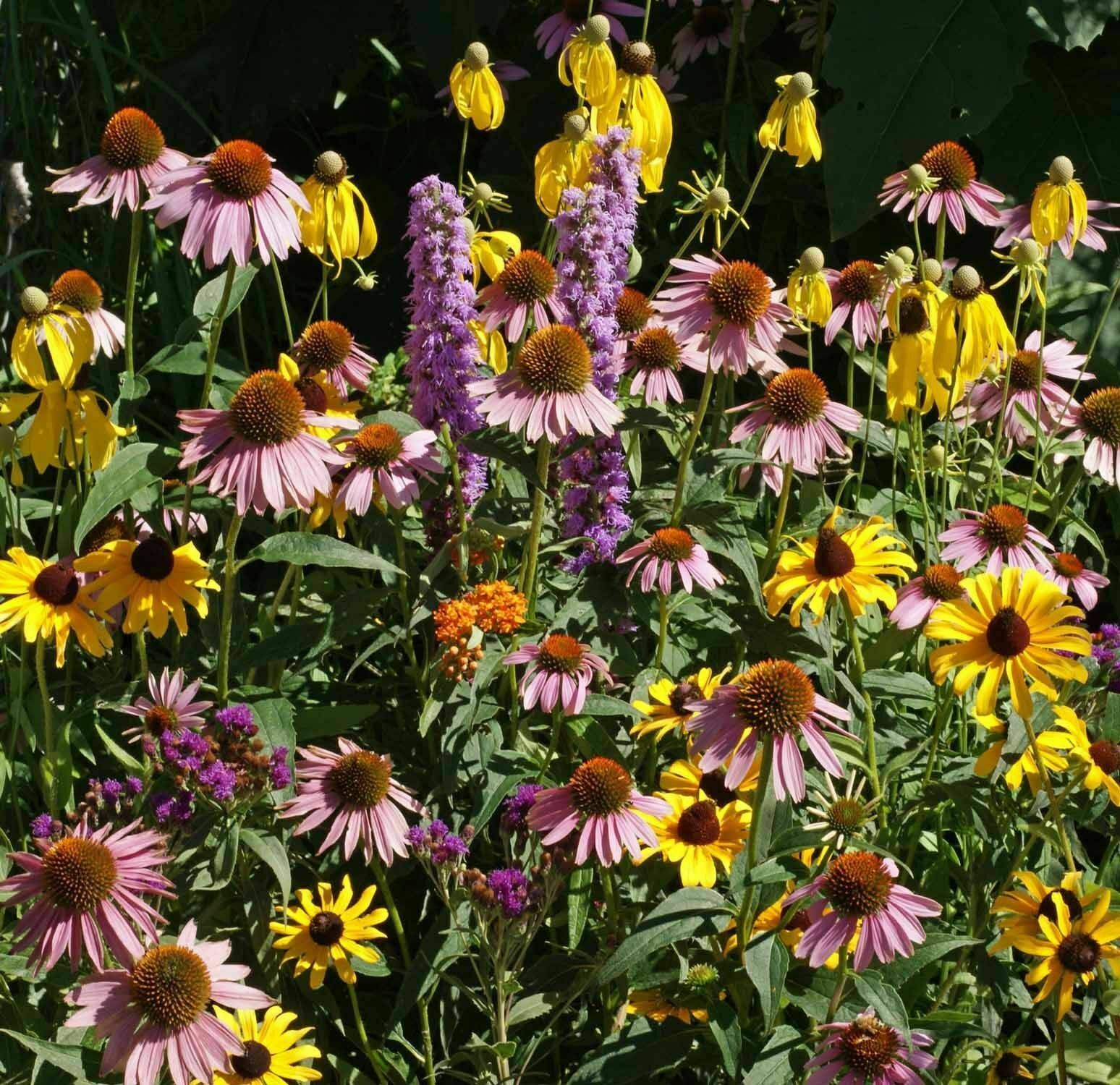 Primary image for SHIP FROM US 28,000 Midwest Wildflower Mix Seeds -Heirloom-Open Pollinated, ZG09