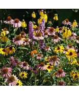 SHIP FROM US 28,000 Midwest Wildflower Mix Seeds -Heirloom-Open Pollinat... - $29.16