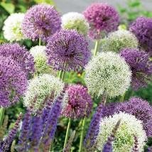 (5 Pack) Mixed Allium Bulbs, Flower Beds, Home Garden, Colorful Bulbs- C... - $13.49