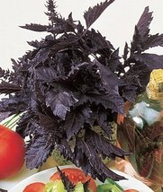 50 Seeds Herb - Basil Purple Ruffles - $19.78