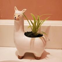 Llama Planter with live Spider Plant, ceramic animal planter pot, houseplant image 2
