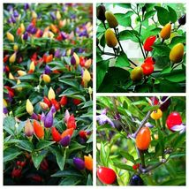 100 Ornamental Pepper Seeds Heirloom An Edible Mix Vegetable Seed S068 - $13.58