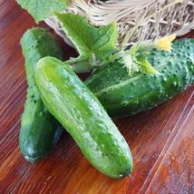 Cucumber Seeds - Marketmore 76- Outdoor Living - Vegetable Seeds - FREE SHIPPING - $34.99+