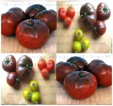 25 Brandywine Black Tomato Seeds - $3.50