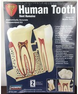 LINDBERG #71312 HUMAN TOOTH MODEL KIT NEW IN ORIGINAL BOX - $18.70