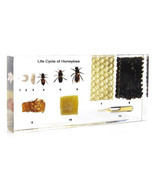 Life Cycle of Honey Bee Kids Learning Aid Science School Educational Pap... - $59.99