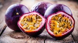 Possum Purple Passiflora Edulis Plant Purple Passion Fruit Plant Edible - $42.59