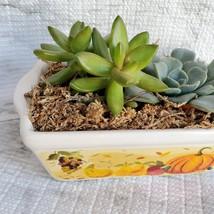 Fall Succulent Dish Garden in vintage harvest loaf pan, Ceramic pumpkin planter image 8
