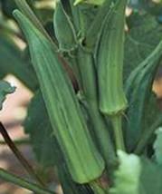Okra Seed, Emerald, Heirloom, Organic, Non Gmo, 100 Seeds, Garden Okra Seed - $15.96