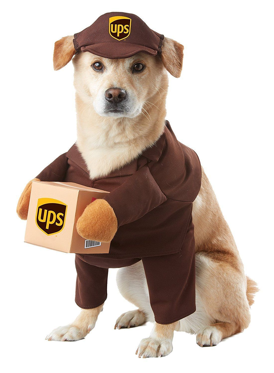 Primary image for California Costumes Ups Pal Mail Entrega Animal Perro Disfraz Halloween PET20151