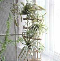 Artificial Air Plant Tillandsia Artificial  Plant Succulent Pineapple Leaf  - $12.86+