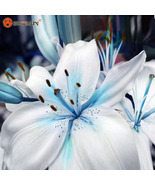Specials Blue Heart Lily Plant Seeds, Blue Heart Lilies Seeds - 50 pcs/lot - $5.99