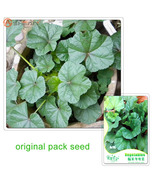 Les bag original packaging chinese mallow seeds callirhoe involucrata vegetables seeds thumbtall