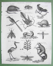 1816 NATURAL HISTORY Print - Musk Rat Flycatcher Ant Eater Sloth - $14.36