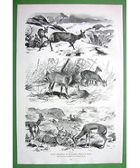 DEER in Winter in Berlin ZOO - VICTORIAN Era Original Engraving - $17.82
