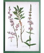 MEDICINAL PLANTS Flowers Loosestrife Mezereum -... - $8.38
