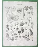 BOTANY Parts of Fructification Fruits - 1822 Or... - $15.15
