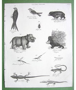 1816 NATURAL HISTORY Print - River Horse Lizard... - $12.20