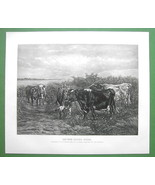 COWS Pasturage River Bank - 1893 Victorian Era Antique Print Photogravure - $18.51