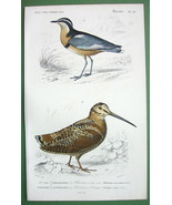 BIRDS Woodcock & Black Plover - 1849 H/C SUPERB... - $17.42