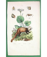 NATURAL HISTORY Sea Daffodil, Panda, Arachnid -... - $15.15