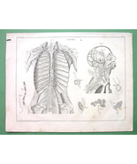 HUMAN ANATOMY Lymphatic System - Antique Print ... - $21.03