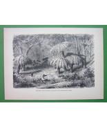 AUSTRALIA Shooting Lyre Birds in Jungle - 1858 Antique Print Engraving - $11.78