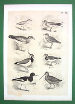 BIRDS Plover Peewit Swallow Oyster Catcher - An... - $11.78