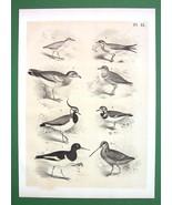 BIRDS Plover Peewit Swallow Oyster Catcher - An... - $11.78