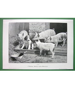 YOUNG DOG Hektor Adventure Among Pigs - VICTORIAN Engraving Print - $20.20