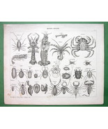 CRABS Spiders  Mites Crustacea - Natural Histor... - $21.03